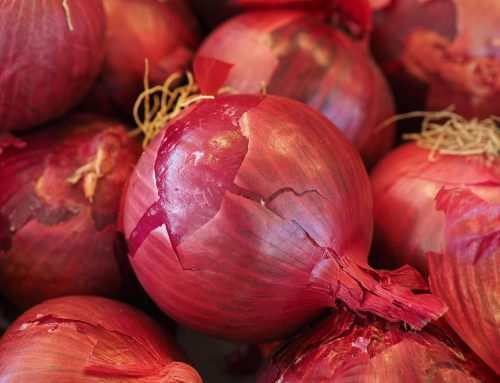 Treating a cough with an onion and raw honey
